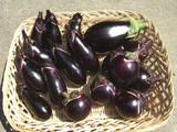茄子各種収穫