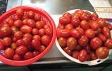トマトの原料