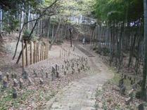 着火前の竹林