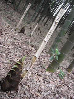 0804親竹の保護札