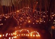 10月 国際 竹灯籠まつり