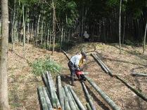 100320間伐竹灯籠材