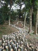 101113〜14韮山竹灯籠まつり1