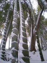 140208雪模様