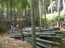 170910竹灯籠用間伐 (1)