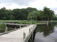 080525厳島湿性公園竹灯篭配置の木道