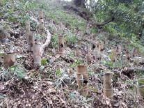 筍畑 (1)