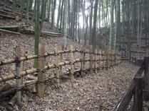 081116本丸下の竹垣