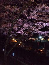 090402多目的広場サクラのライトアップ