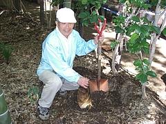 0804親竹の密度管理4