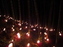 幻想の竹林