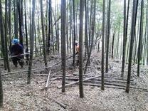 140506縮小小机枯竹の運搬処理