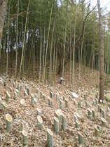 100328竹灯籠設置とカッポ筒製作