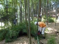 170910竹灯籠用間伐 (3)