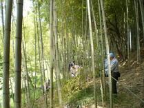 090526ハチク親竹選定と密度管理(若竹伐採)