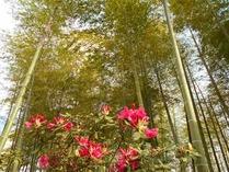 縮小 シャクナゲと竹