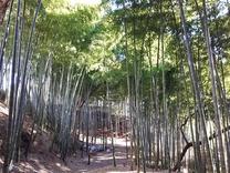 200305木漏れ日の射す竹林と林床