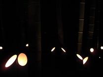 081004浮び上る竹の幽玄
