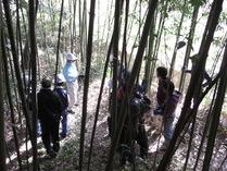 081123竹林内での学び