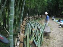 間伐竹集積