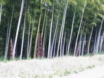 200501国際竹の子