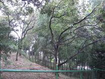 080919東エリア下草の刈られた竹林