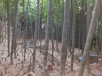 筍畑 (2)