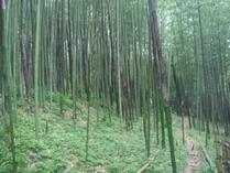 中井町竹林 伸びました