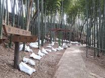 竹灯籠の配置