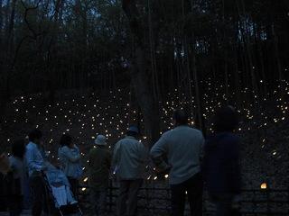 080404こどもの国 Bエリアの竹灯籠とお客さん