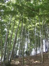 080224宮前区間伐後の竹林