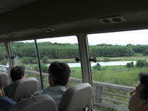081001栗見橋から右岸のマダケ林