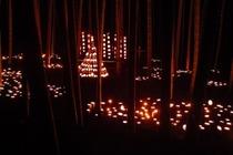 縮小 竹灯籠まつり (2)