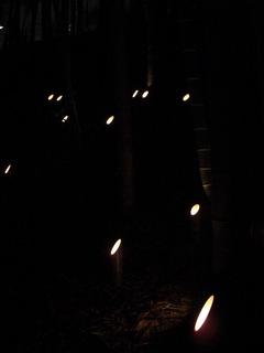 080413斜面の竹灯籠