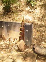 090509イレギュラー竹の子