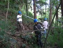 081018竹の伐り出し