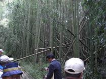 081001未整備部の竹林