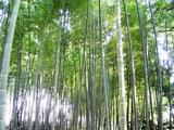 071202小机筍畑の竹林