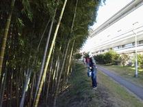 111211横浜国際プール間伐と冬の施肥
