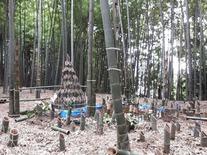 筍畑 (3)