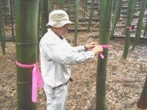 小机間伐竹のマーキング