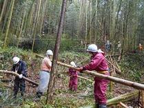150411伊豆 雨中の竹林整備
