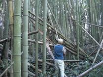 081001竹刈り名人チップソーで切断
