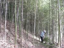 081123林床に陽がさします