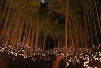 日本の竹ファンクラブ記録員撮影