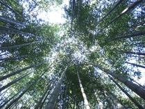 100902夏の竹林