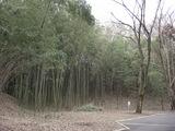 080226A地区ハチク竹林