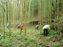 梅雨の竹林整備
