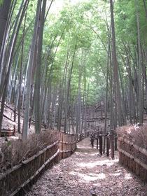 小机城址の竹林