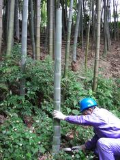 080605プール 竹水取水